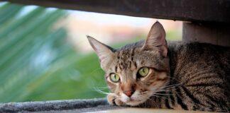 Hills karma dla kota
